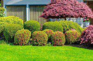 garden-maintenance-sa