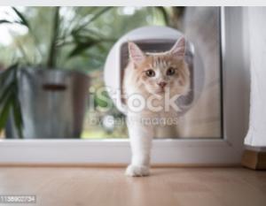 Affordable Pet Doors in Adelaide